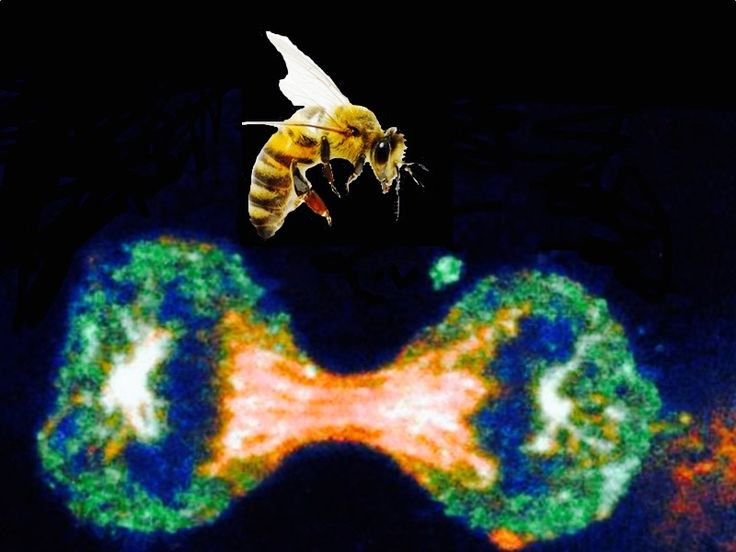 Bee Propolis is Venomous to Cancer Cells! – MyKidCuresCancer.com
