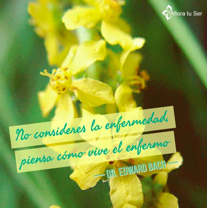 Frases de Edward Bach - Flores de Bach www.afloratuser.com