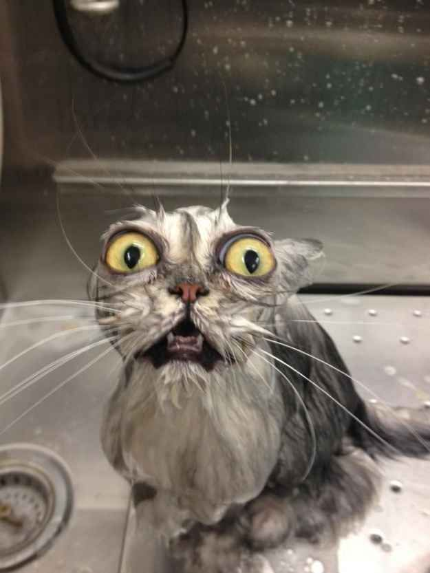 This cat who decided he'd let the human give him a bath for once.