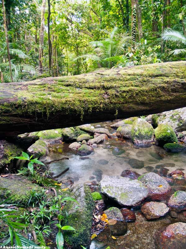 Wurrmbu Creek - Mossman Gorge, Queensland, Australia