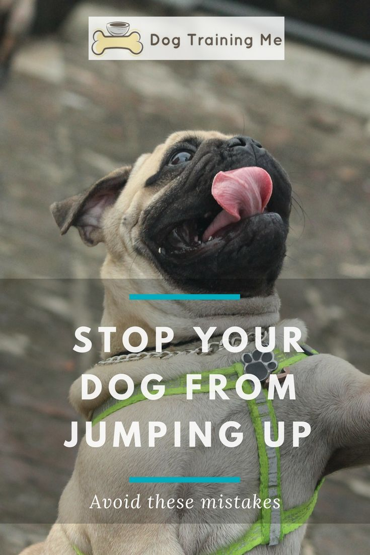 How To Stop Your Dog From Jumping Up Dog Training Dog Training