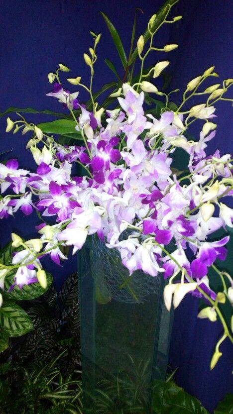 Výstava orchidejí 3/17