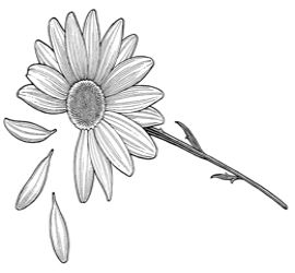 Daisy OutlineTattoo