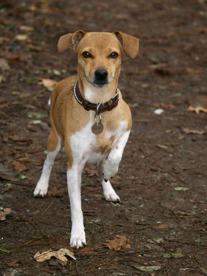 Suche Meine Hundin Finderlohn 1000 Euro In Baden Wurttemberg Rastatt Susse Baby Tiere Hunde Tiere