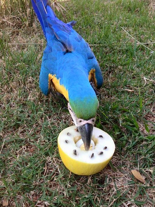 Bird Enrichment Toys : Best images about bird enrichment on pinterest