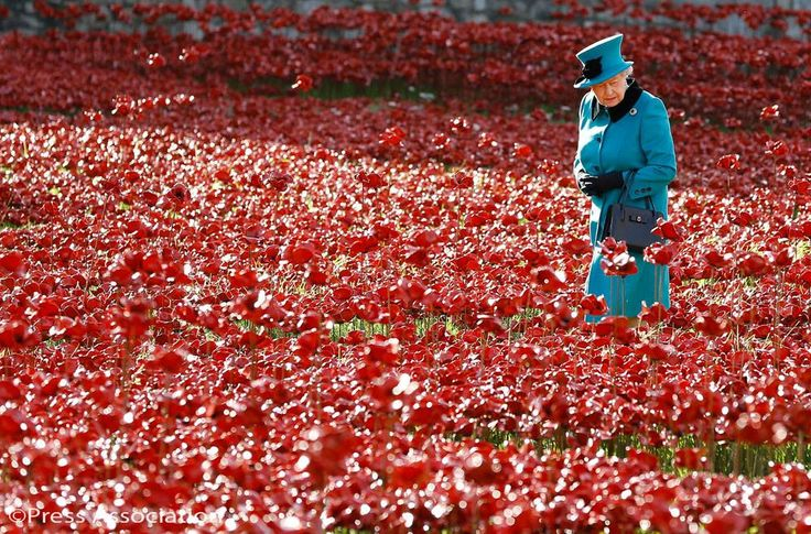 Queen Elizabeth surveys the sea of poppies at the Tower of London - commemorating WWI servicemen