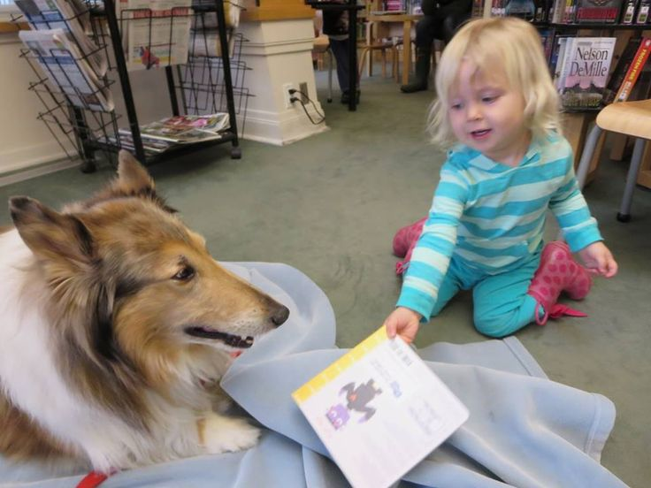 """We had so much fun during the """"Paws for Stories"""" program at #Richvale Library. Thanks to the amazing folks with the St. John Ambulance Therapy Dog Program."""