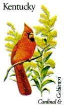 Kentucky State Bird - Cardinal (Redbird) - AND Kentucky State Flower - Goldenrod