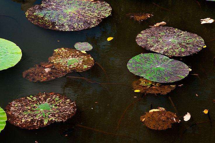 Frog – MrJane