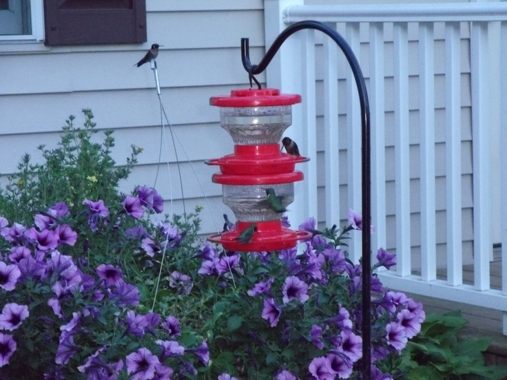 ...: Flowers, Hummingbirds