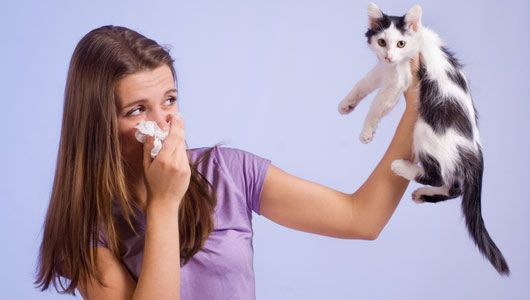 Are cats worse than dogs for allergy sufferers?