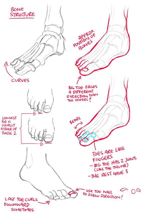 Bone structure foot