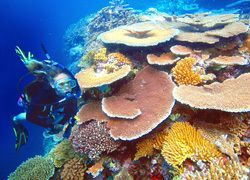 7 night family package to explore North Queensland and the Great Barrier Reef - BYOkids