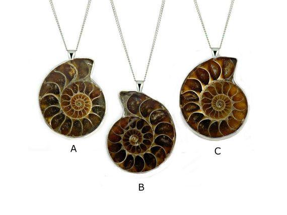 Ammoniet ketting fossiele ketting cadeau door RoseAndRabbitDesigns
