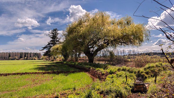 Fotografía Campo chileno por Freddy Briones Parra en 500px