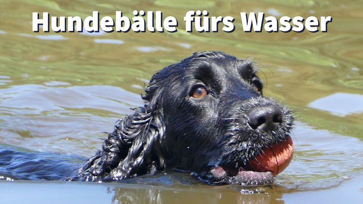 Welcher #Hundeball schwimmt im #Wasser?
