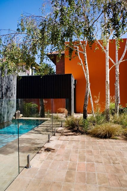 Full saturation.Gardens Architecture, Birches Trees, Inspiration, Orange Wall, Landscapes Design, Gardens Design, Eckersley Gardens, Australian Gardens, Accent Wall