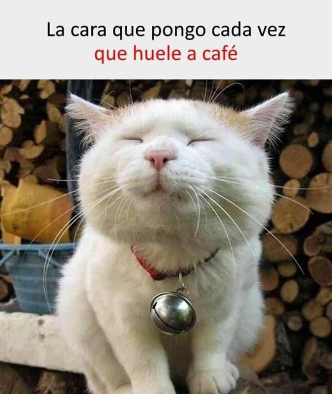 Memesespañol Chistes Humor Memes Risas Videos Argentina Memesespaña Colombia Memesmexico Memes Love Vir Funny Animal Pictures Funny Cats Cute Cats