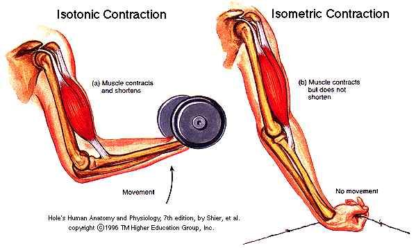 "IsoTONic vs IsoMETric. Think of isotonic as ""lifting a ton"" to help remember the difference."
