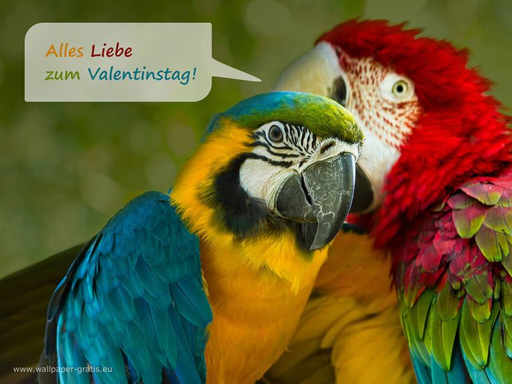 Tier wünscht alles Liebe zum Valentinstag 001 - Hintergrundbild kostenlos