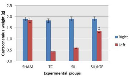 Gastrocnemius muscle weight measurement. The gastrocnemius muscles of both sides (operated left and unoperated right) were excised and weighed in the experimental groups at 12 weeks after surgery. Data are presented as mean ± SE. * P < 0.05 vs SIL group.