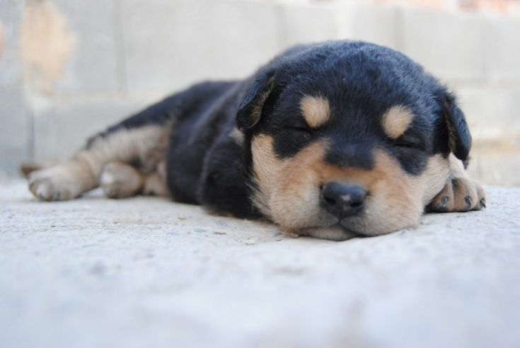 how to get puppy to sleep through the night reddit