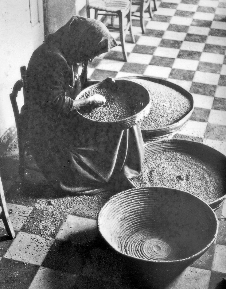 """donna che fa la cernita dei cereali .  """" Prughendu """""""