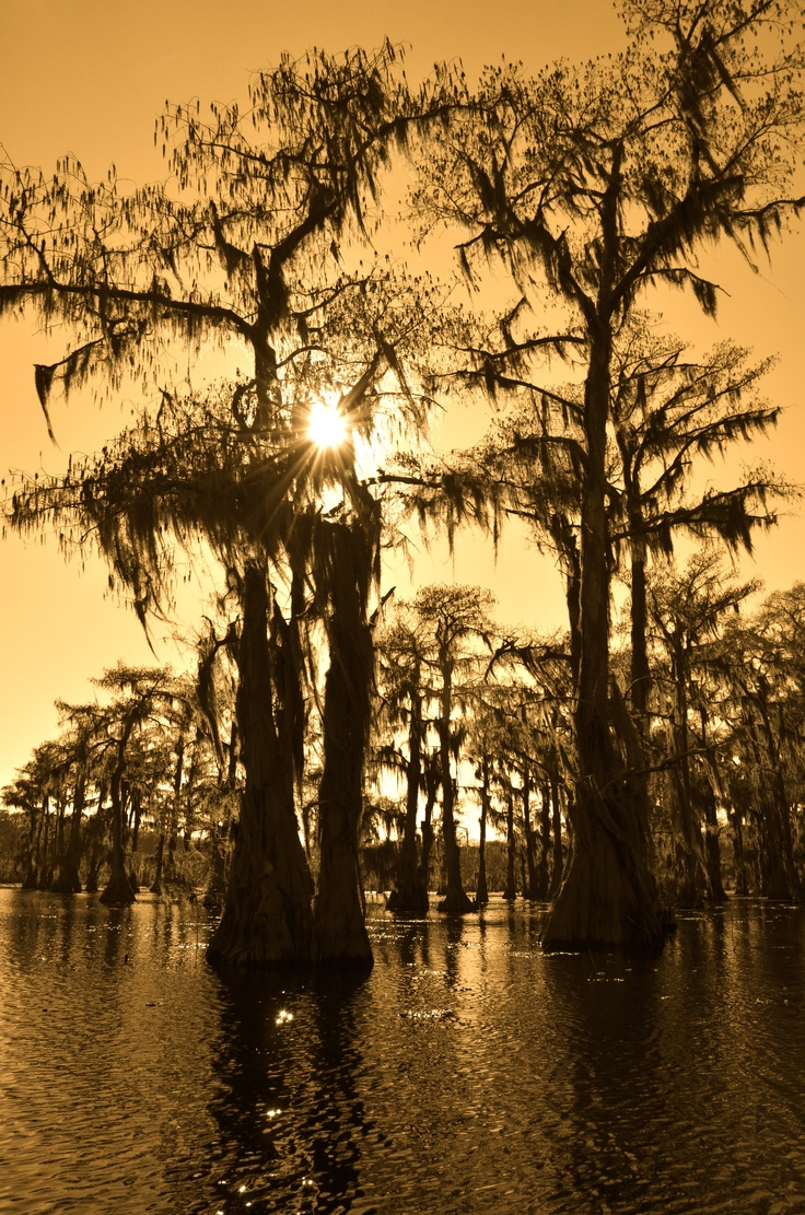 40 Best Images About Caddo On Pinterest The Boat Boats