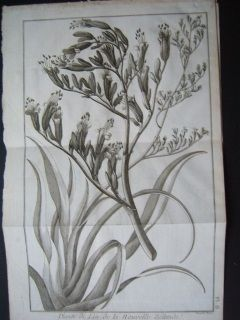 New Zealand Flax Cooks voyages. 1775. Copperplate engraving. Benard.  380 x 250 mm