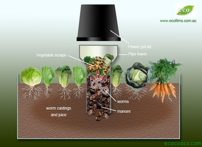 PERMACULTURA  tubo de pvc enterrado+ restos organicos + tapa  http://ecocosas.com/agroecologia/como-atraer-lombrices-al-huerto/