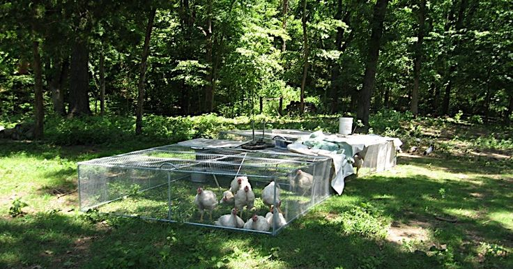 pile of o'melays: how to build a chicken tractor cheap