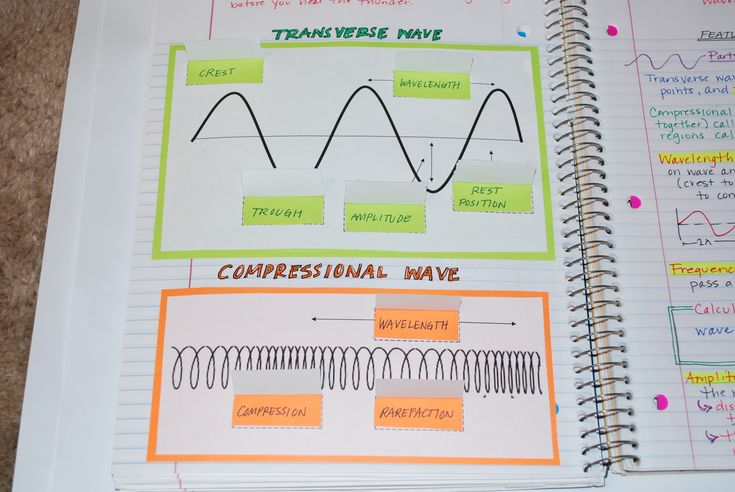Parts of transverse and compressional waves.