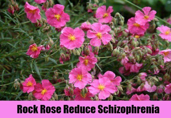 Natural Herbal Supplements   AyurvedicCure.com - https://www.ayurvediccure.com/7-natural-cures-for-schizophrenia/