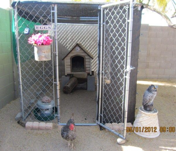 25 best ideas about cheap outdoor dog kennels on for Cheap dog pens for outside