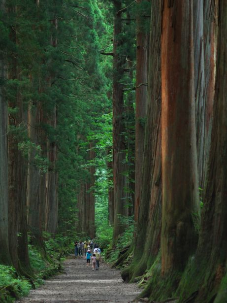 Muir Woods - one of the most beautiful places on earth. Land of Ancient living forest. Redwoods resist forest fires and live for hundreds of years, some to over a thousand years.