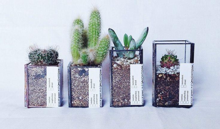 植物×廃材「ハコミドリ」の作品の一例