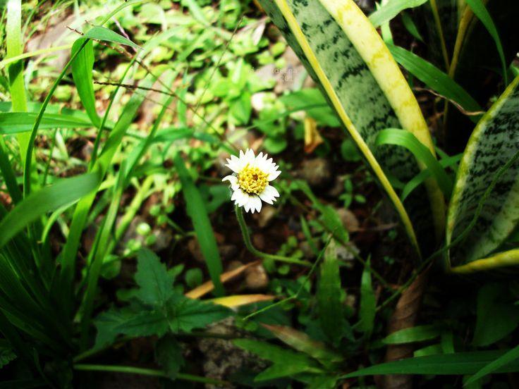 Wild Flower by lisa-adrina.deviantart.com