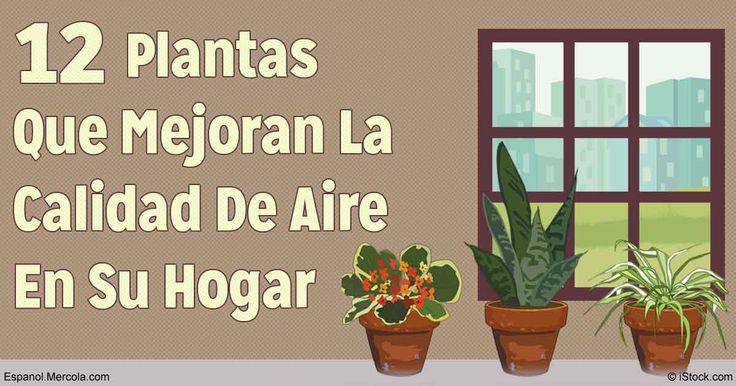 Agrega plantas es una manera simple y placentera de mejorar el aire en su hogar y trabajo con al fin de absorber la contaminación del aire.