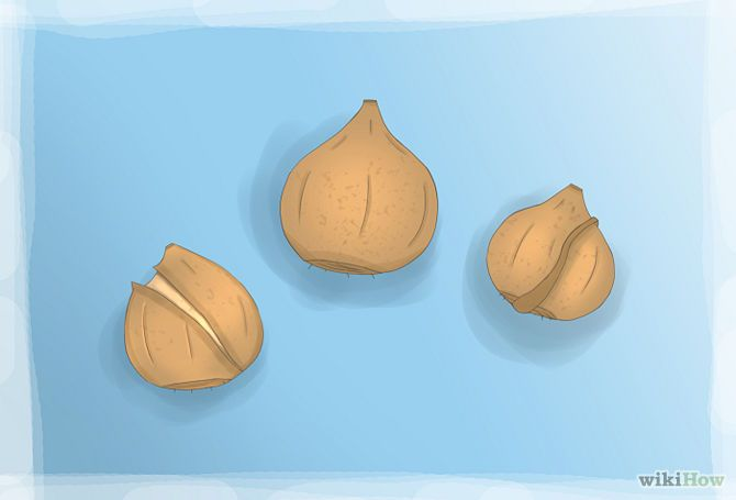 How to Plant Tulip Bulbs: 8 Steps (with Pictures) - wikiHow