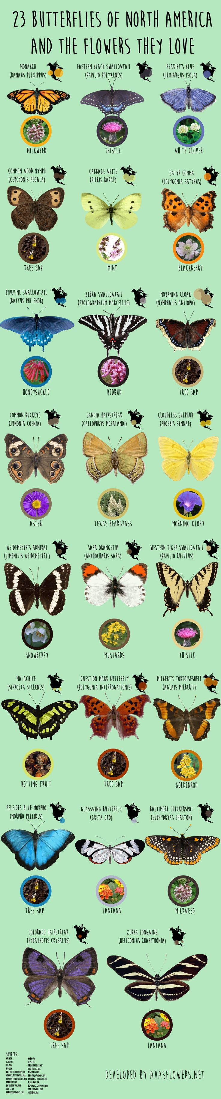 Native butterflies and the flowers they love