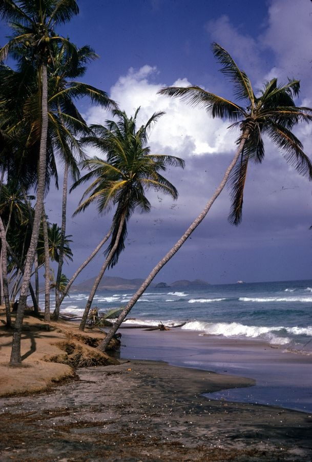 Beautiful Palm Tree-Lined Beach ~ Isla de Margarita, Venezuela