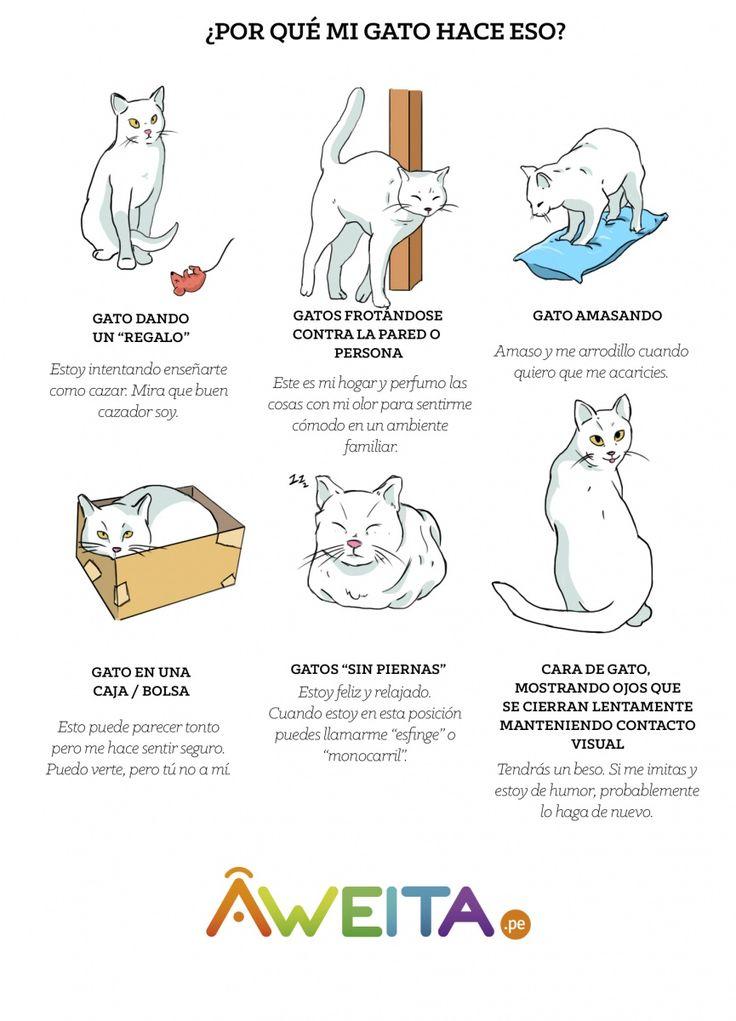 ¿Qué trama tu gato? Esto significa cada gesto de tu gatito (INFOGRAFÍA)