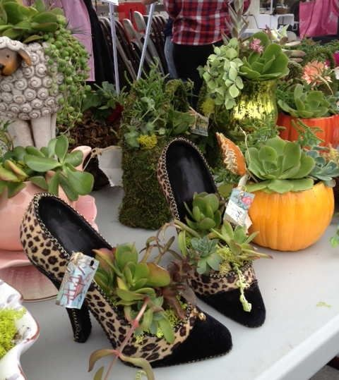 Pin By Jane Dickey On Succulents
