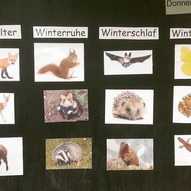 Kleine Unterrichtseinheit zum Thema Tiere im Winter