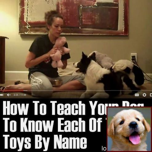 Tips On Potty Training A Pomeranian Puppy And How Do You Train A
