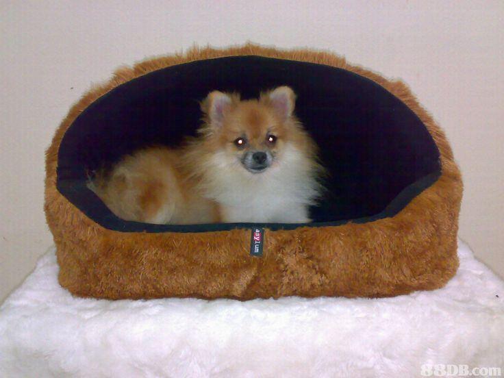 Tempat Tidur Shiro, anjing kesayangan om Meong