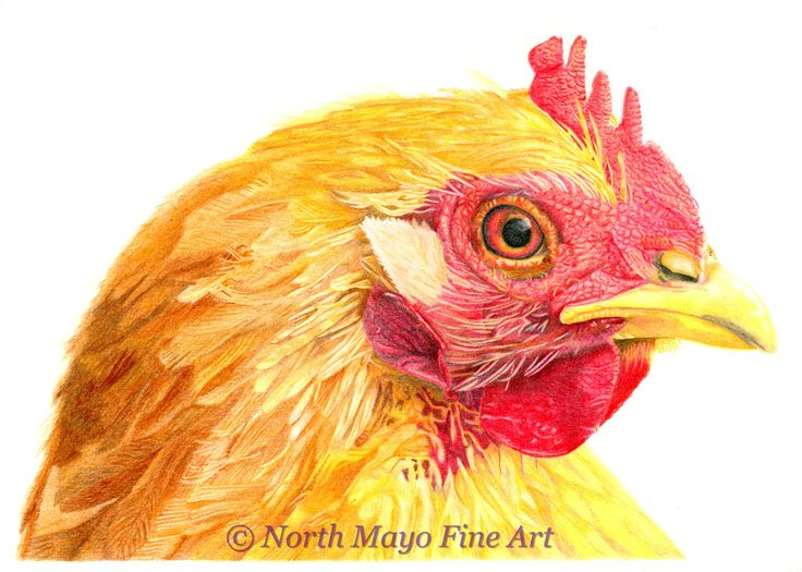'Red Hen' is a coloured pencil drawing