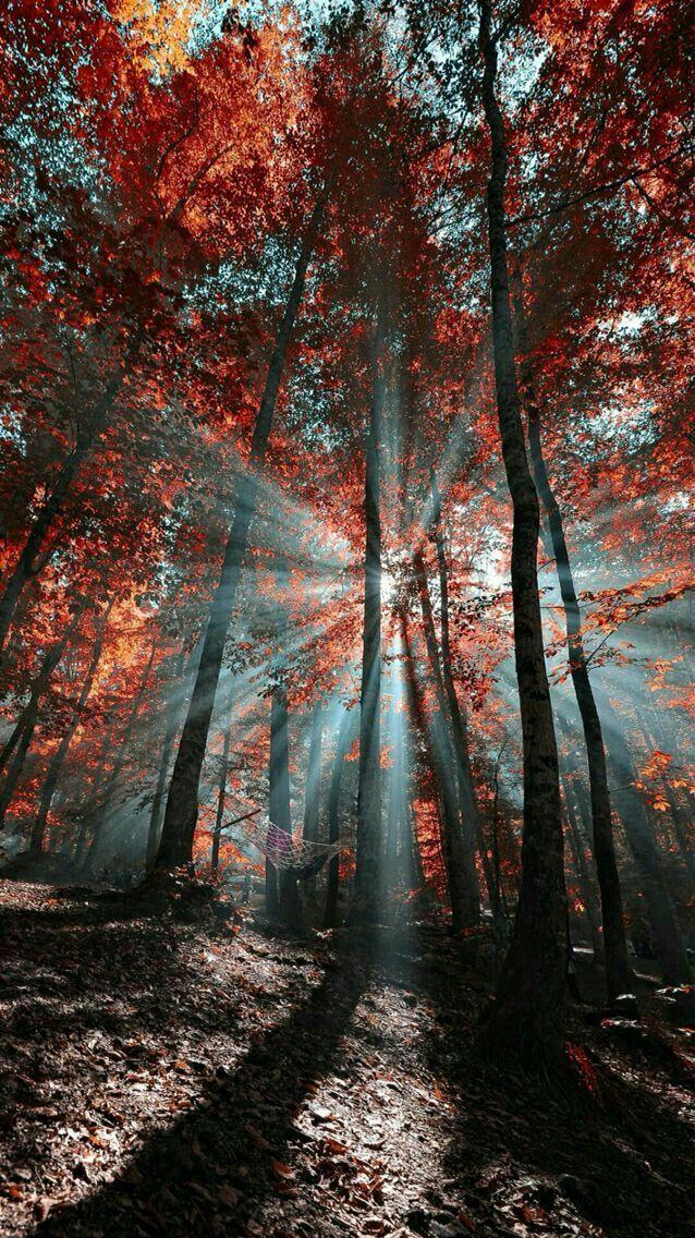 Mysterious Forest Forest Wallpapers Forest Mysterious Wallpaperbackgrou Photo Paysage Magnifique Photographie De Paysages Fond Ecran Gratuit Paysage