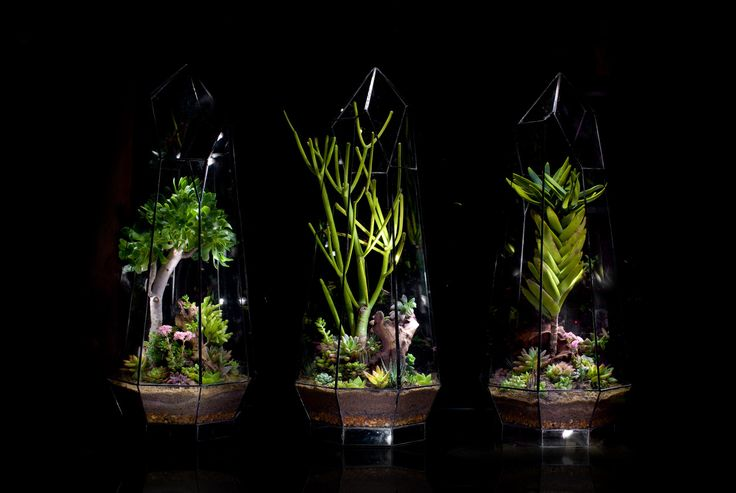 Crystal Terrarium selection by Angles & Earth