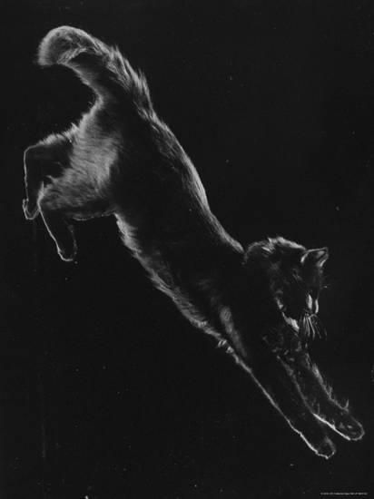 Portrait of Blackie, Gjon Mili's Cat Photographic Print by Gjon Mili at Art.com